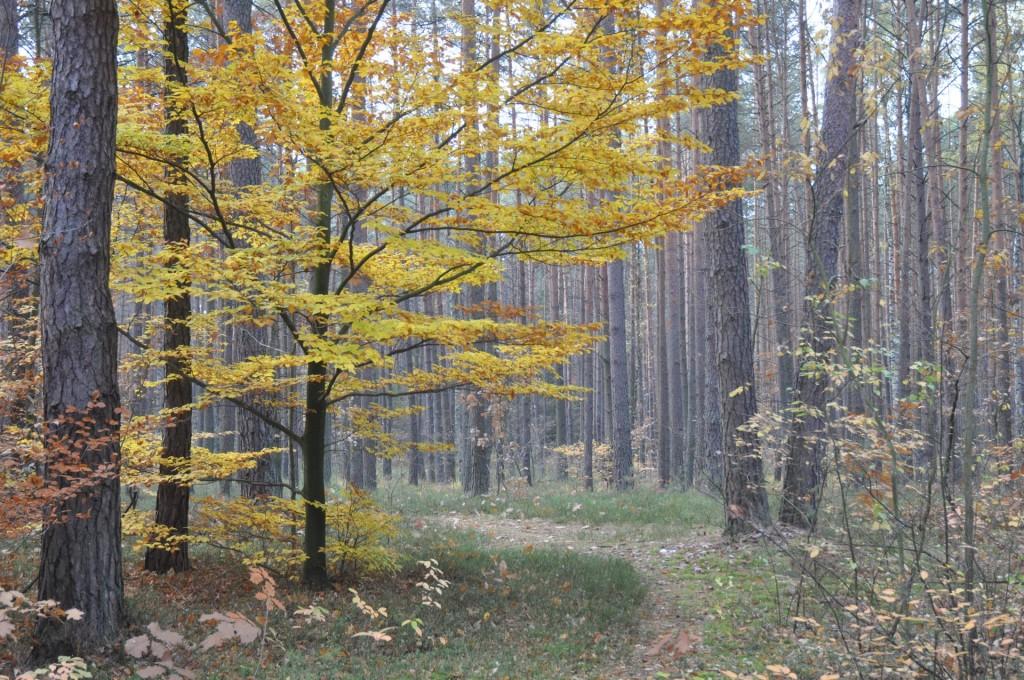 """Ścieżka spacerowa w pobliżu Ośrodka Edukacji Ekologicznej """"Lasy Janowskie"""""""
