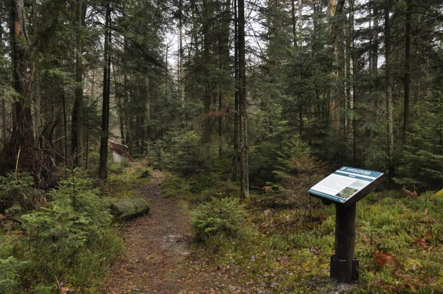 Ścieżka przyrodnicza w rezerwacie Szklarnia